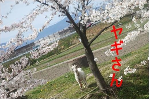 20100410_09961_M.jpg