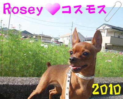 20101008_11033_.jpg