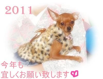 20110101_11851_.jpg