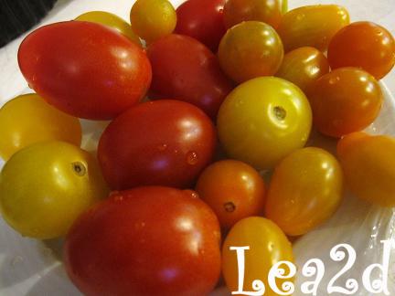2010年1月 ノースショア・ファームズでトマト購入