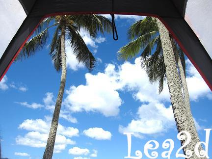 2010年8月 ヤシの木見上げてHaleiwa Beach Park(ハレイワ・ビーチ・パーク)ブログへ移動