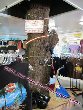 2011年1月 マウイ島、ハーレーの店内に大木