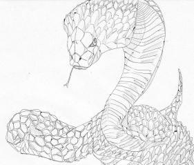 地を這う蛇