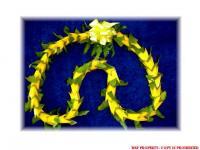 hala_convert_20100515210015.jpg