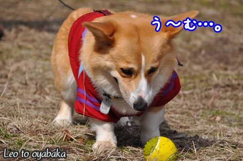ぼくがボールに届くはずがないのだけど…。