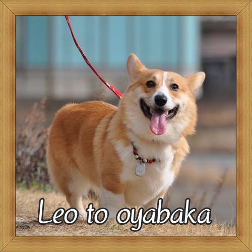 ぼくレオだよっ♪