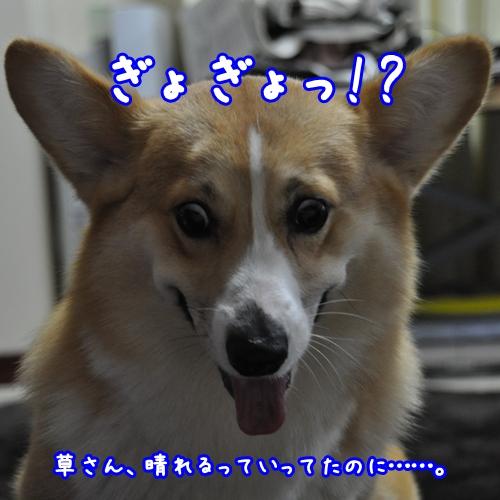 ぎょぎょっ♪