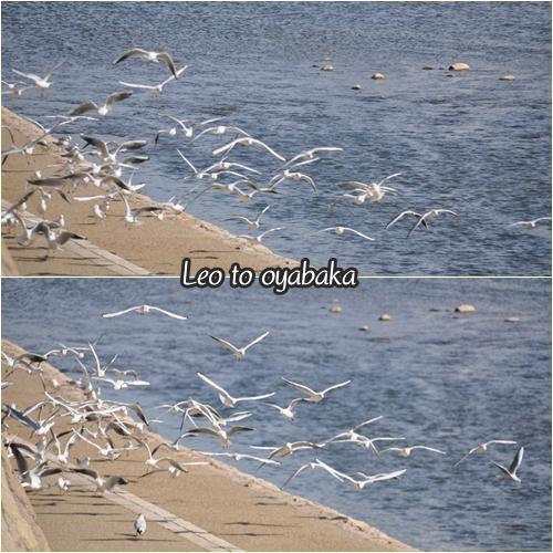 水鳥さんがいっぱいいるよ♪
