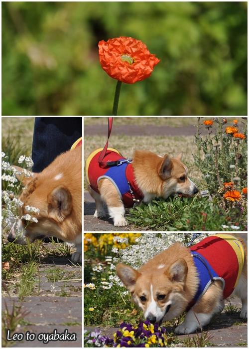 レオの大好きなお花がいっぱい♪