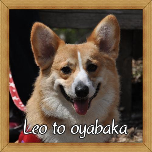 ぼく、レオだよ♪