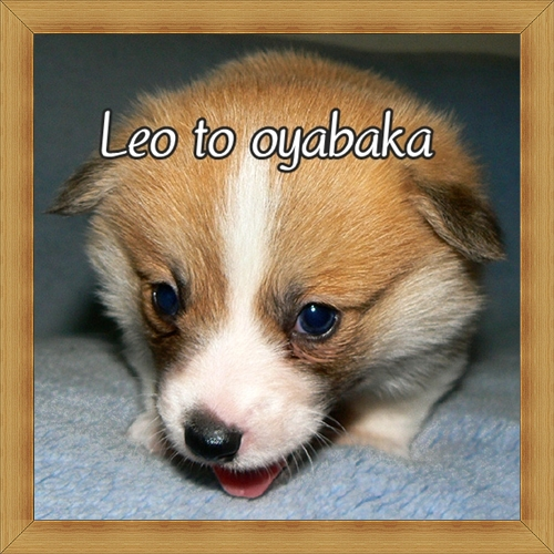ぼく、レオだよっ♪