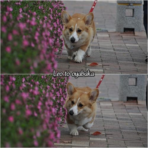 お花のにおいを感じながらのお散歩だよ♪