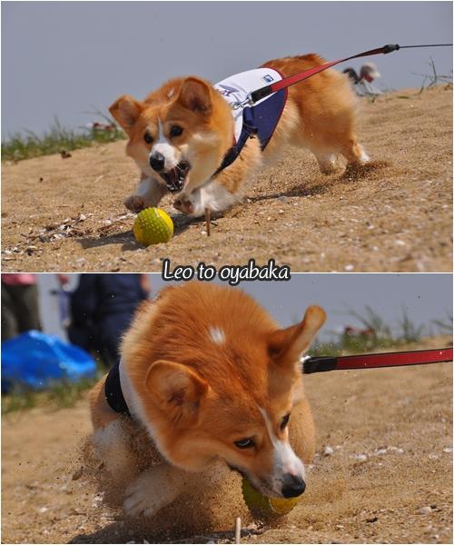 砂浜ではボール遊び♪