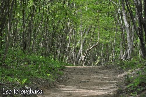 少し広めの林道