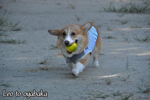 「ボールもってこい」遊びをしているときも♪