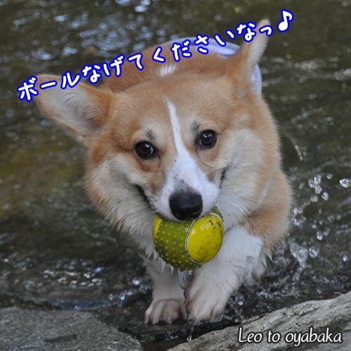ボール投げてくださいなっ♪