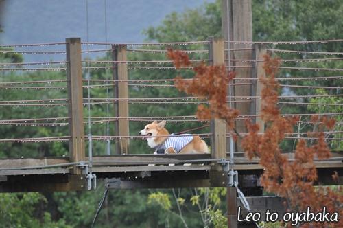 吊り橋を渡ったりね♪
