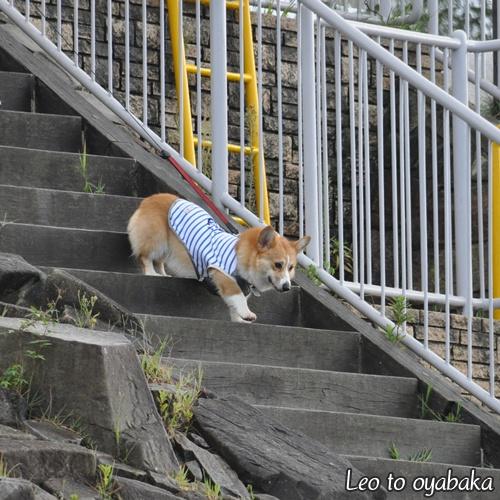 階段を駆け下りたりね♪