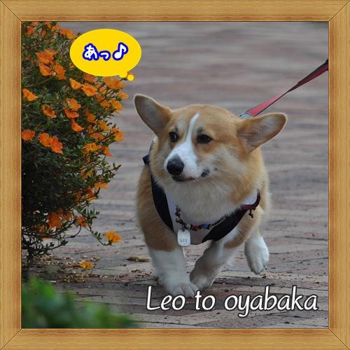 ぼく レオだよっ♪