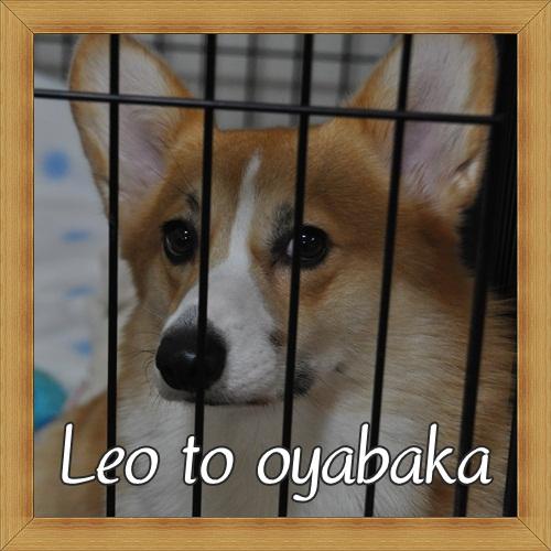 ぼくレオだよ♪