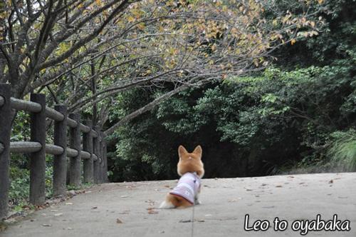 お散歩日和の1日。
