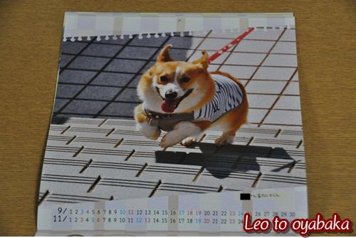 カレンダーに採用♪2