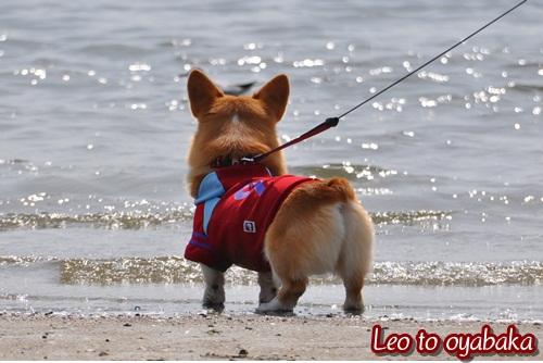 大好きな海でも♪
