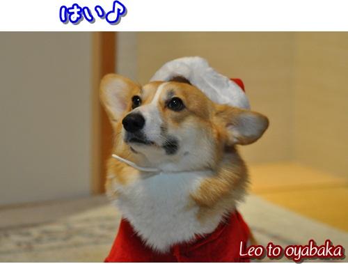レオ君サンタ登場してください♪