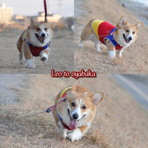 お散歩楽しいな~♪