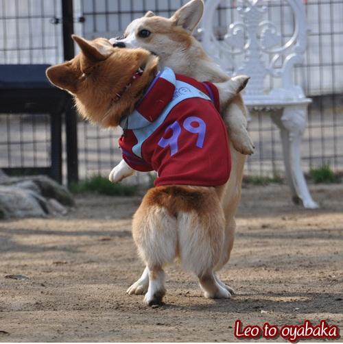 コギ相撲♪