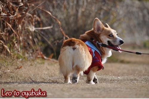 お散歩大好き♪