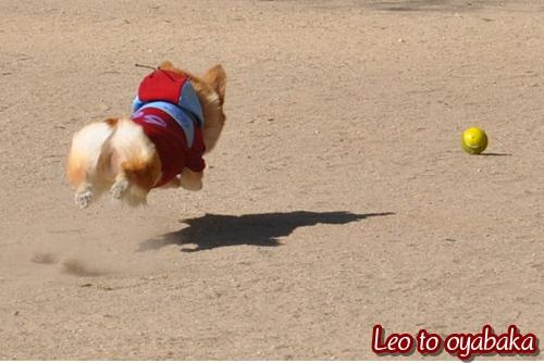 飛べ♪レオ♪