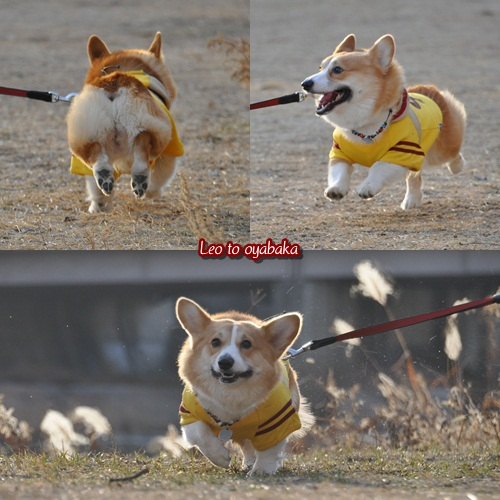 走るよ~♪