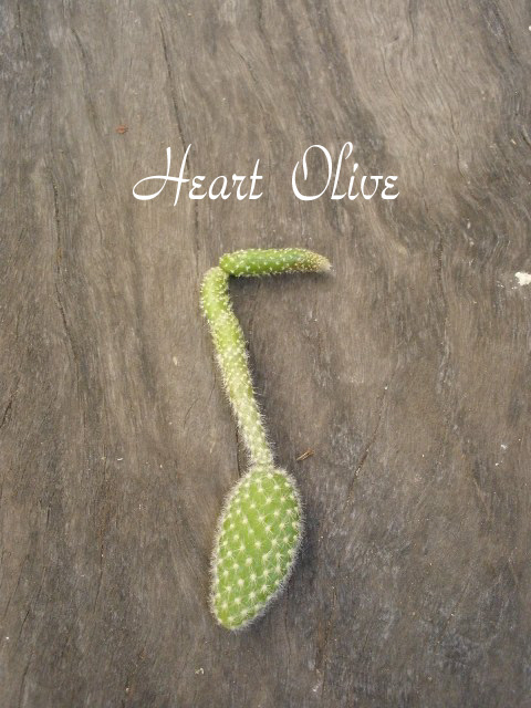 Heart Oliveccc