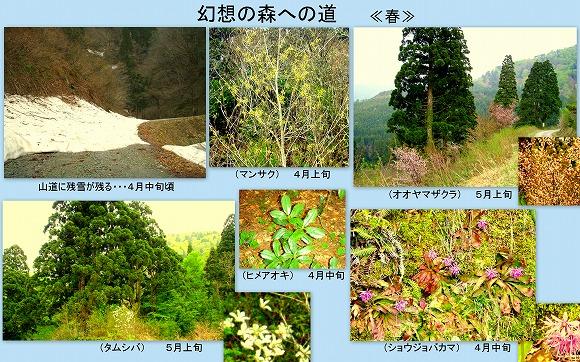幻想の森への道[春]