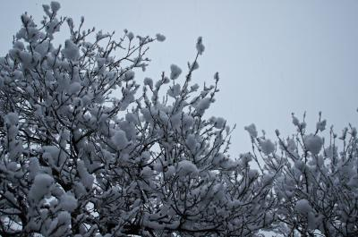 13-12-12雪2