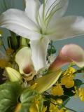osonae box flower