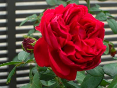 CIMG9839_convert_20101024145949.jpg