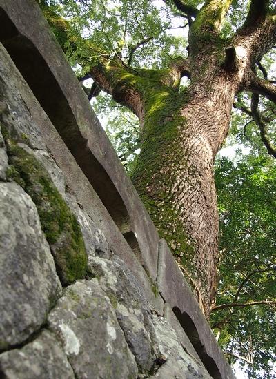 20121216 福本八幡宮17