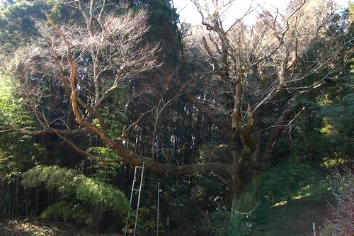 250112 籾山八幡神社14