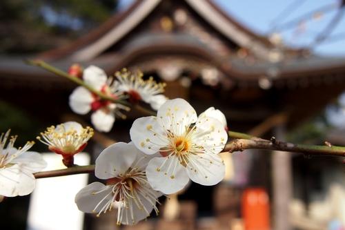 250211 波多神社29