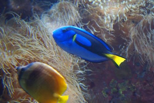 250306 美ら海水族館5