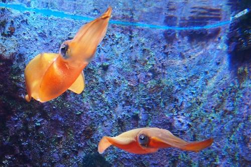 250306 美ら海水族館4