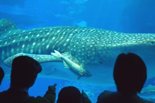 250306 美ら海水族館9