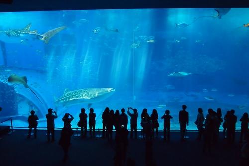250306 美ら海水族館7
