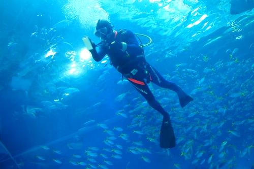 250306 美ら海水族館13