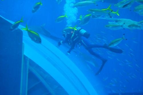 250306 美ら海水族館12