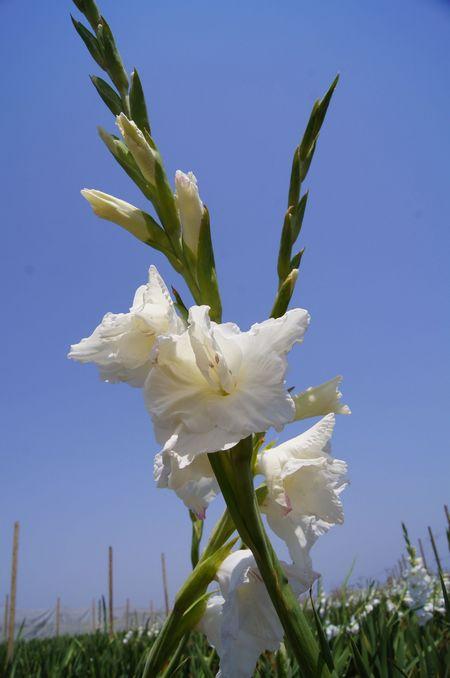 240413 花卉2