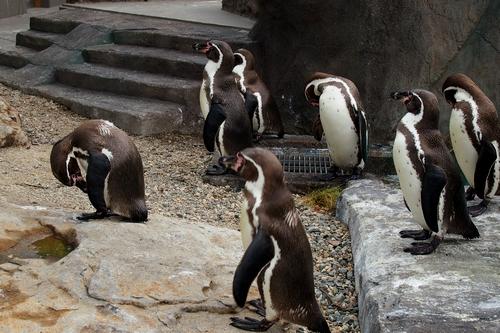 250511 動植物園11