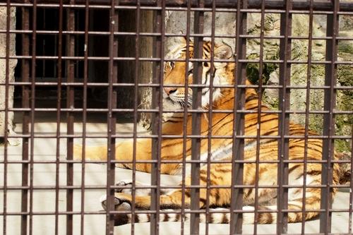 250511 動植物園8